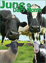 Dairy supplement